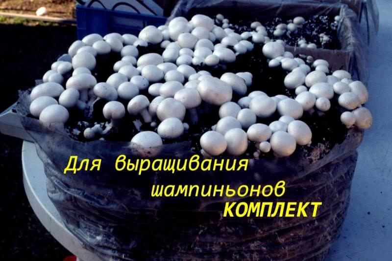 Как вырастить грибы в мешках в домашних условиях